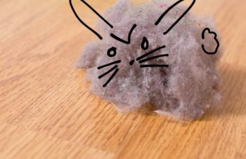 8 Ways to Eliminate Dust Bunnies